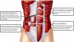 The abdominal muscles are stretched and weakened during pregnancy.